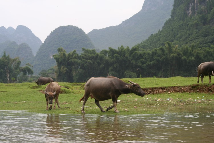 Het platteland nabij Yangshuo