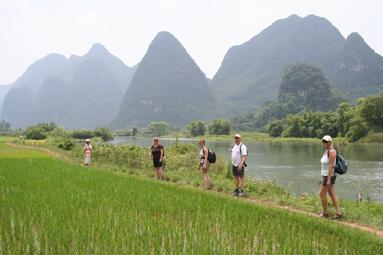 Groene rijstvelden rondom Yangshuo