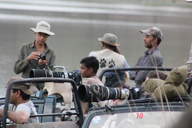 Wildlife spotten in Ranthambore - India