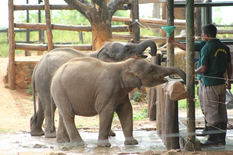 Elephant Transit Home - reis Sri Lanka