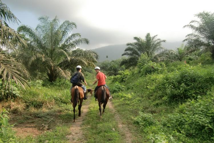 Selva Bananito, Costa Rica