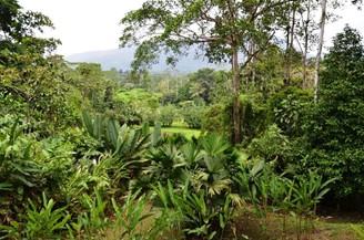 Selva Bananito - reizen Costa Rica