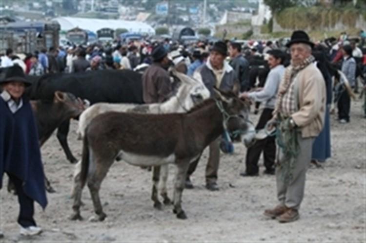 Reise Ecuador - Samstagsmarkt in Otavalo