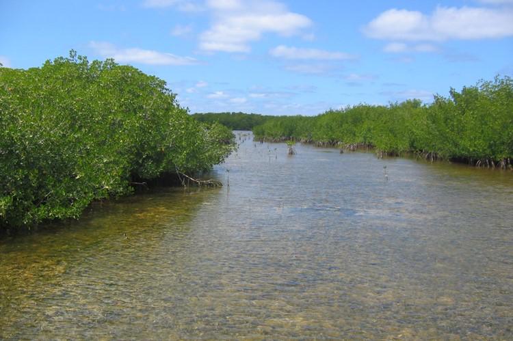 Mangroven Cayo las Brujas, Cuba