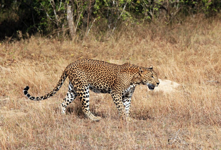 Yala Nationaal Park - reis Sri Lanka