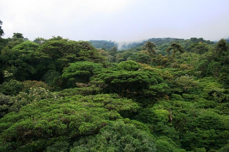 Monteverde - rondreis Costa Rica