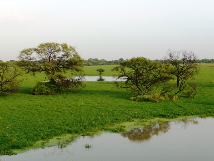 Bharatpur, Keoladeo Nationaal Park, India
