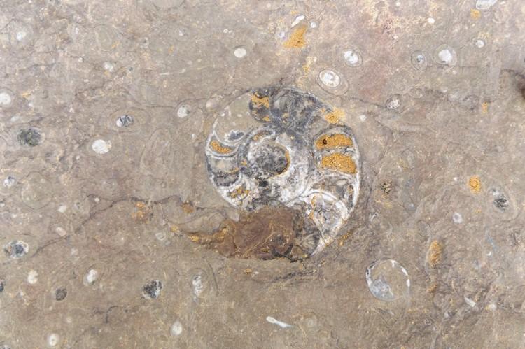 Fossielen in Erfoud - Marokko