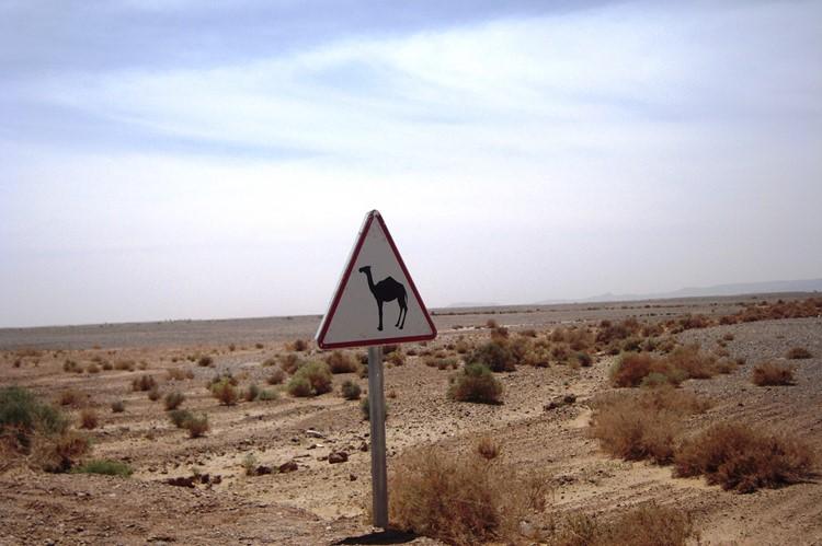 Overstekend wild bij Erfoud - Marokko