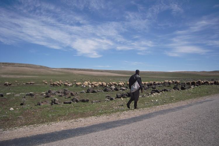 Een herder op weg - Midelt - Marokko