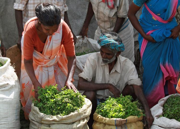 Madurai markt - reis India