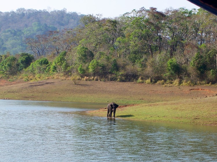 Olifant in Periyar Nationaal Park - Zuid-India rondreis