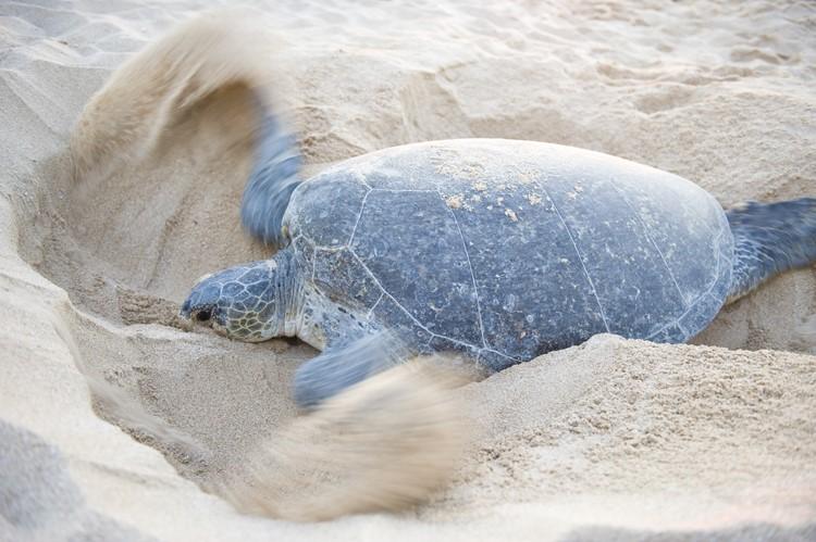 Sea Turtle Nursery - Phuket