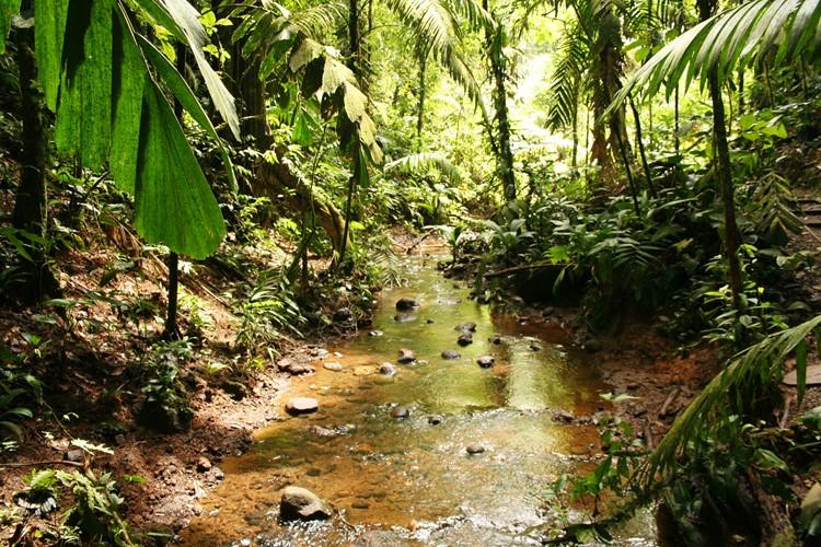 Reise Costa Rica - Sarapiqui