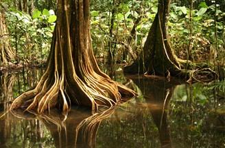 Reise Costa Rica - Drake Bay