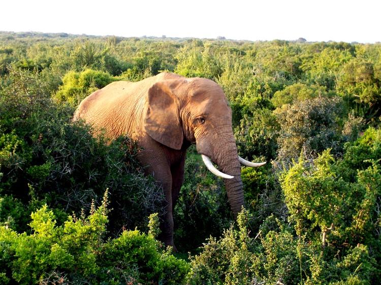 Addo Olifanten Park - reis Zuid-Afrika