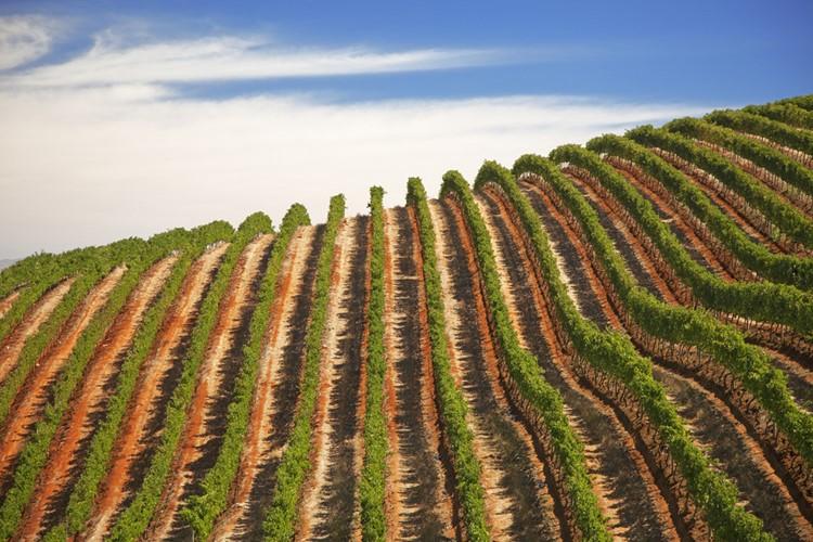 Wijngaarden in West Kaap - reis Zuid-Afrika
