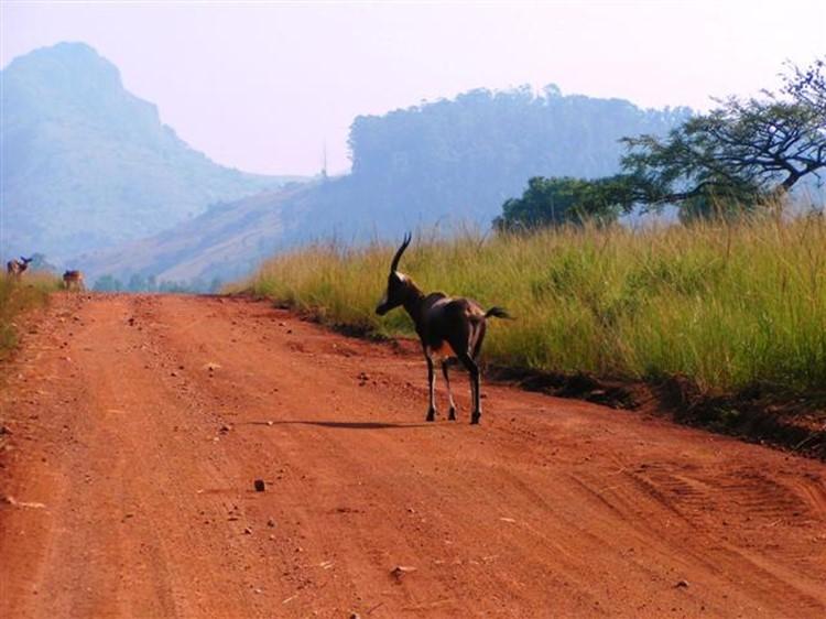 Swasiland - Reisebaustein Südafrika