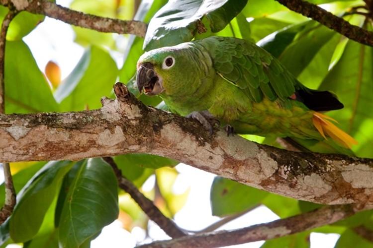 Reisebaustein Costa Rica - La Ensenada