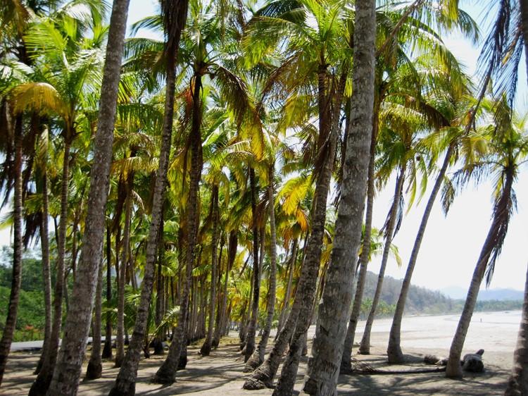 Reisebaustein Costa Rica - Playa Samara