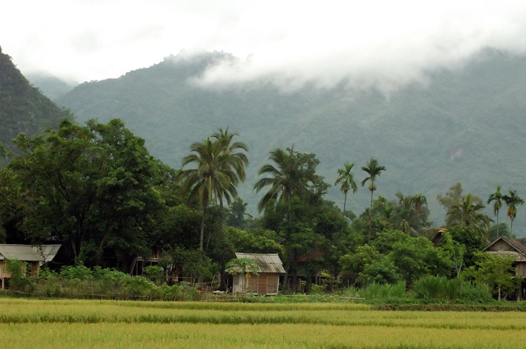 Mai Chau - reis Vietnam