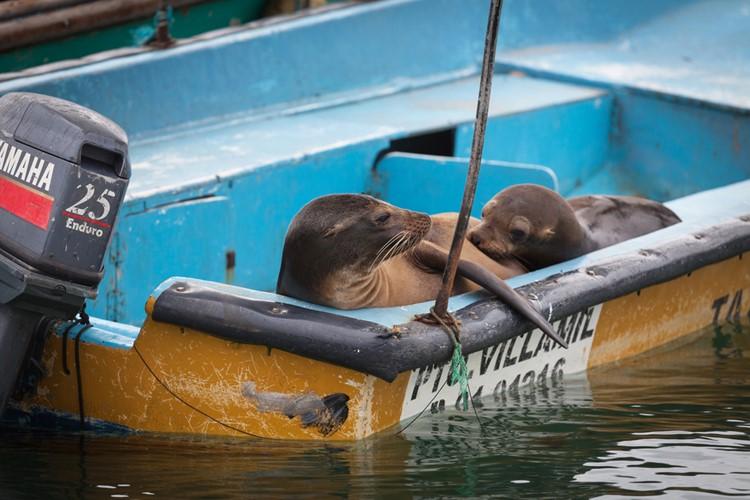 De haven van Villamil, Isabela - Galápagos - Ecuador