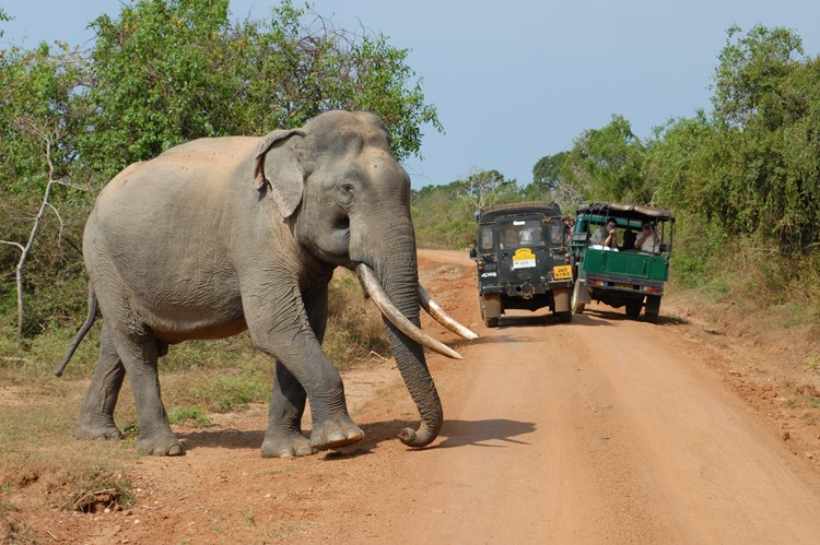 Op safari in Wilpattu National Park, Sri Lanka