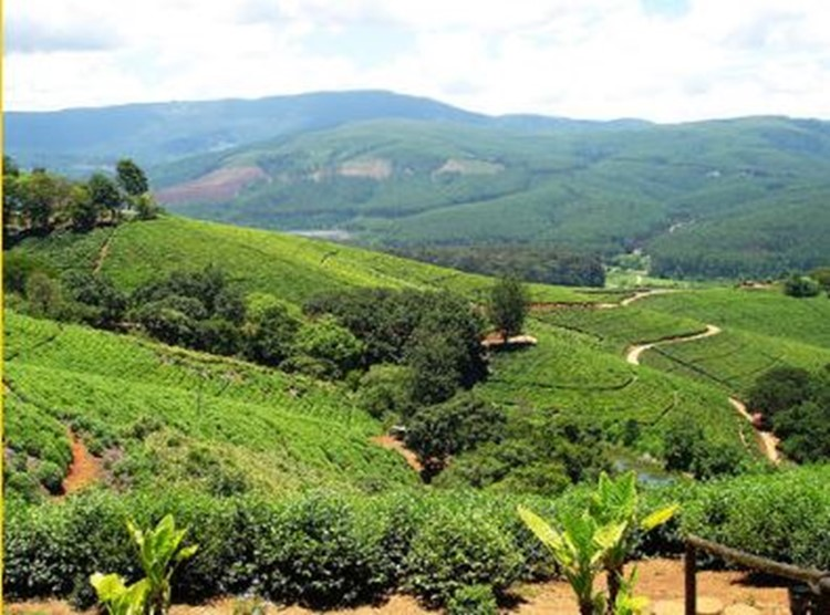 Tzaneen - Reisebaustein Südafrika