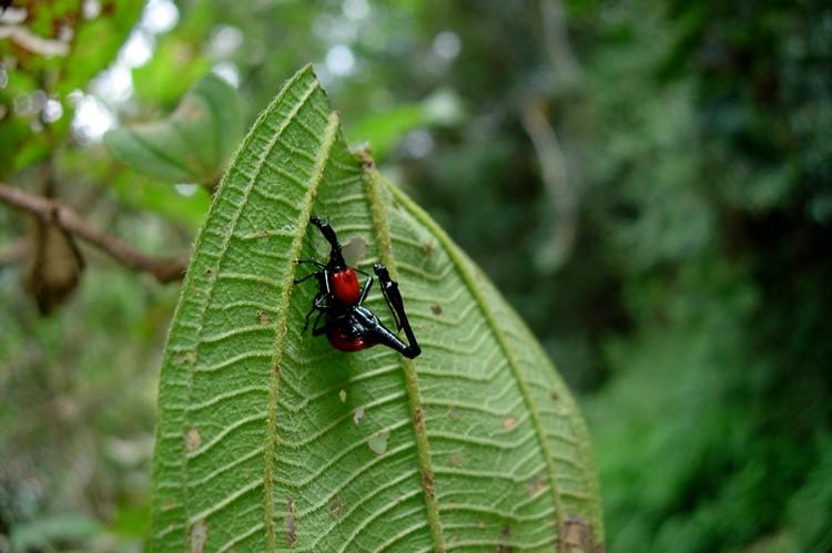 Ranomafana Nationaal Park